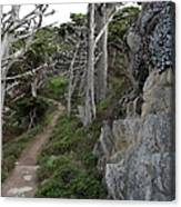 Cypress Grove Trail Canvas Print