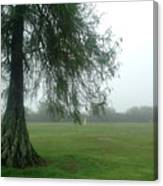 Cypress In The Mist Canvas Print