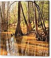 Cypress In The Swamp Canvas Print
