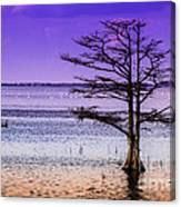 Cypress Purple Sky 2 Canvas Print