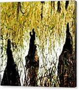 Cypress Roots Canvas Print