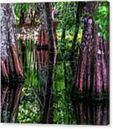 Cypress Secrets Canvas Print
