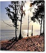 Cypress Shore Canvas Print