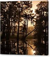 Cypress Sunrise Canvas Print