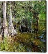 Cypress Trees 4021 Canvas Print