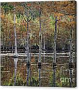 Cypress Tree Fall Reflections Canvas Print