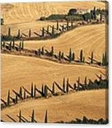 Cypress Tree Lined Road Canvas Print