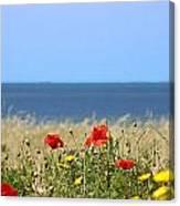 Cyprus Poppies Canvas Print