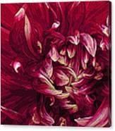 D Light Ful Dahlia Canvas Print