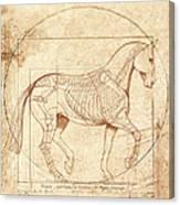 da Vinci Horse in Piaffe Canvas Print
