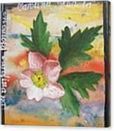 Texas Wildflowers Tp X Canvas Print