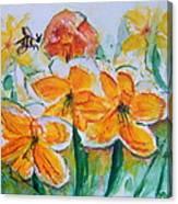 Daffies Canvas Print