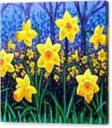 Daffodil Dance Canvas Print