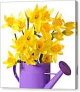 Daffodil Display Canvas Print