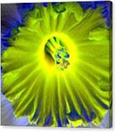 Daffodil Dreams - Photopower 1904 Canvas Print