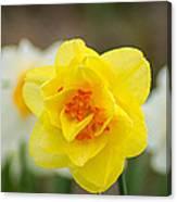 Daffodil Standout Canvas Print