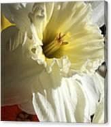 Daffodil Still Life Canvas Print