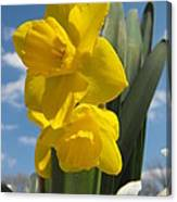 Daffodills In Spring Canvas Print