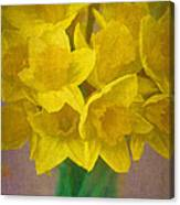 Daffodils 10 Canvas Print