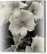 Daffodils Emerge Canvas Print