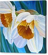 Daffodils Narcissus Canvas Print
