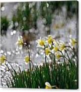Daffodils On The Shore Canvas Print