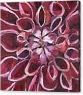 Dahlia - Closeup 2 Canvas Print