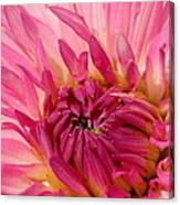 Dahlia 2am-104251 Canvas Print