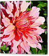 Dahlia 7 Canvas Print