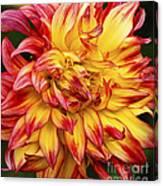 Dahlia - 757 Canvas Print