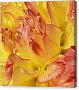 Dahlia - 812 Canvas Print