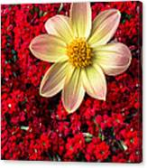 Dahlia And Kalanchoe Canvas Print