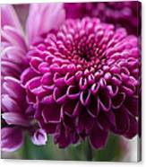 Dahlia And Mums Canvas Print