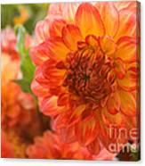 Dahlia Bright Canvas Print