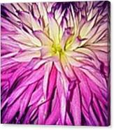 Dahlia Bursting With Color Canvas Print