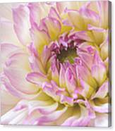 Dahlia Delight Square  Canvas Print