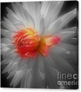 Dahlia Flower Beauty Canvas Print