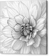 Dahlia Flower Black And White Canvas Print
