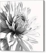 Dahlia Flower In Monochrome Canvas Print