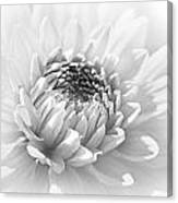 Dahlia Flower Soft Monochrome Canvas Print