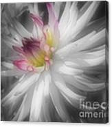 Dahlia Flower Splendor Canvas Print
