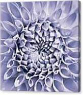 Dahlia Flower Star Burst Purple Canvas Print