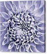 Dahlia Flower Star Burst Purple Canvas Print