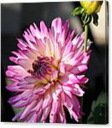 Dahlia Generations Canvas Print