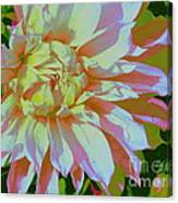 Dahlia In Pink And White Canvas Print