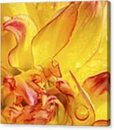 Dahlia In The Rain - 815 Canvas Print