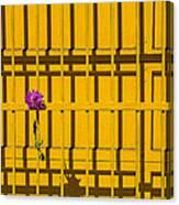 Dahlia In Yellow Gate Canvas Print