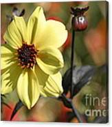 Dahlia Knockout Canvas Print