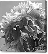 Dahlia Named Bodacious Canvas Print