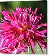 Dahlia Named Normandy Wild Willie Canvas Print